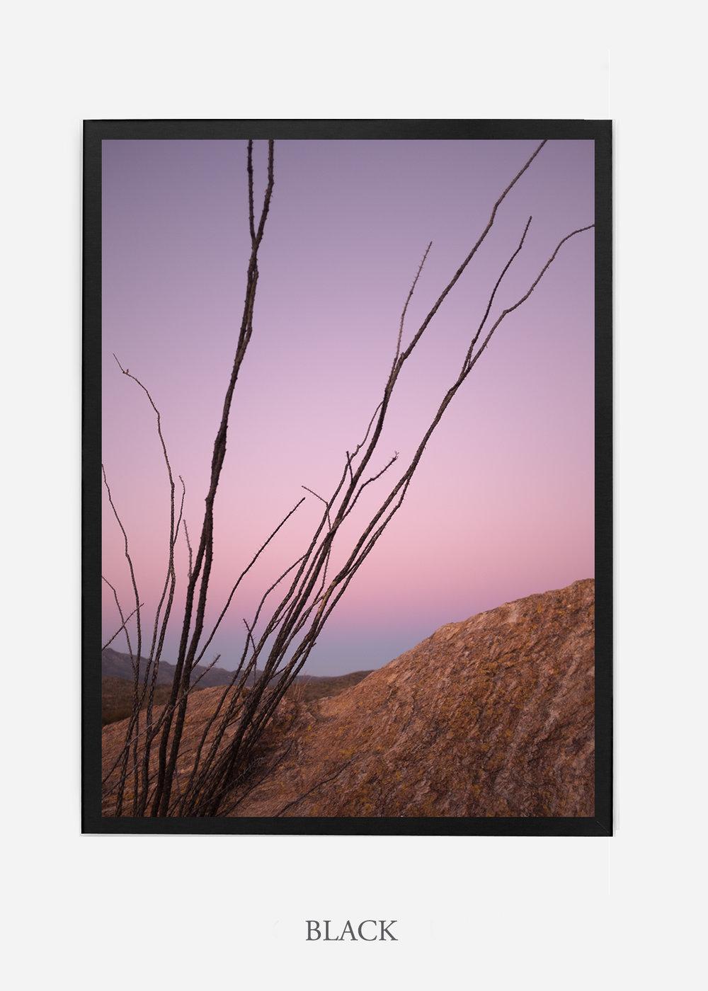 nomat-blackframe-saguaroNo.12-wildercalifornia-art-wallart-cactusprint-homedecor-prints-arizona-botanical-artwork-interiordesign.jpg