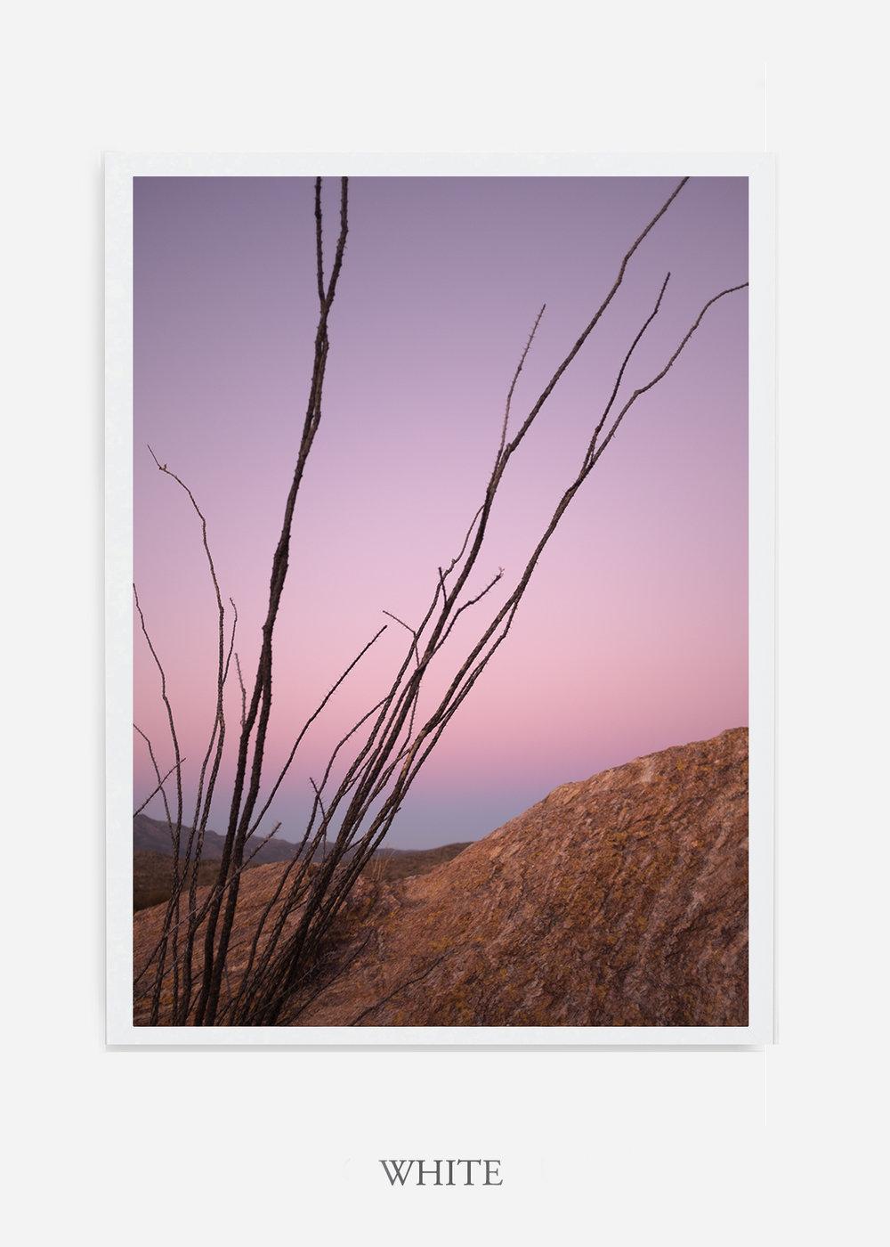 nomat-whiteframe-saguaroNo.12-wildercalifornia-art-wallart-cactusprint-homedecor-prints-arizona-botanical-artwork-interiordesign.jpg