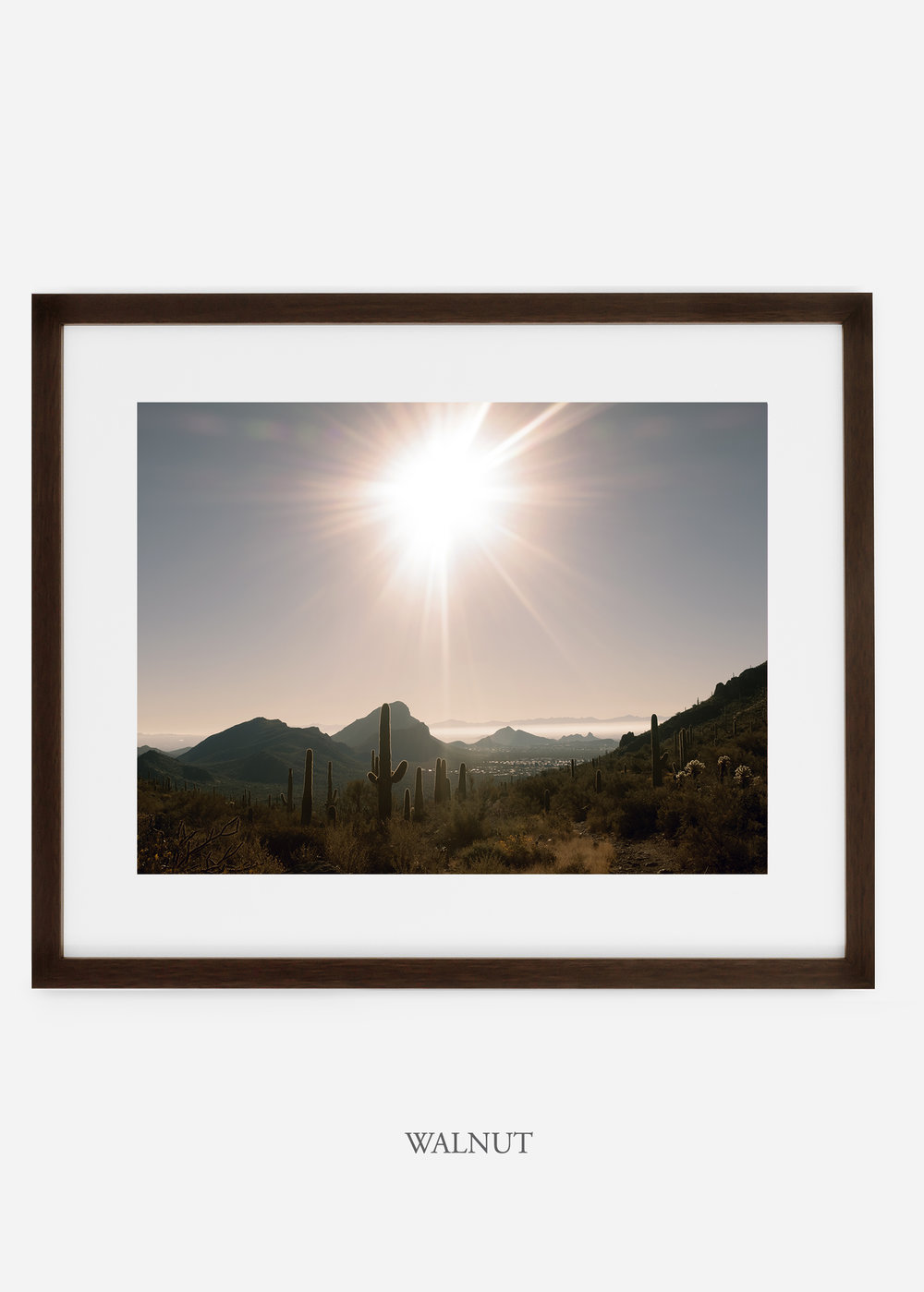 walnutframe-saguaroNo.15-wildercalifornia-art-wallart-cactusprint-homedecor-prints-arizona-botanical-artwork-interiordesign.jpg
