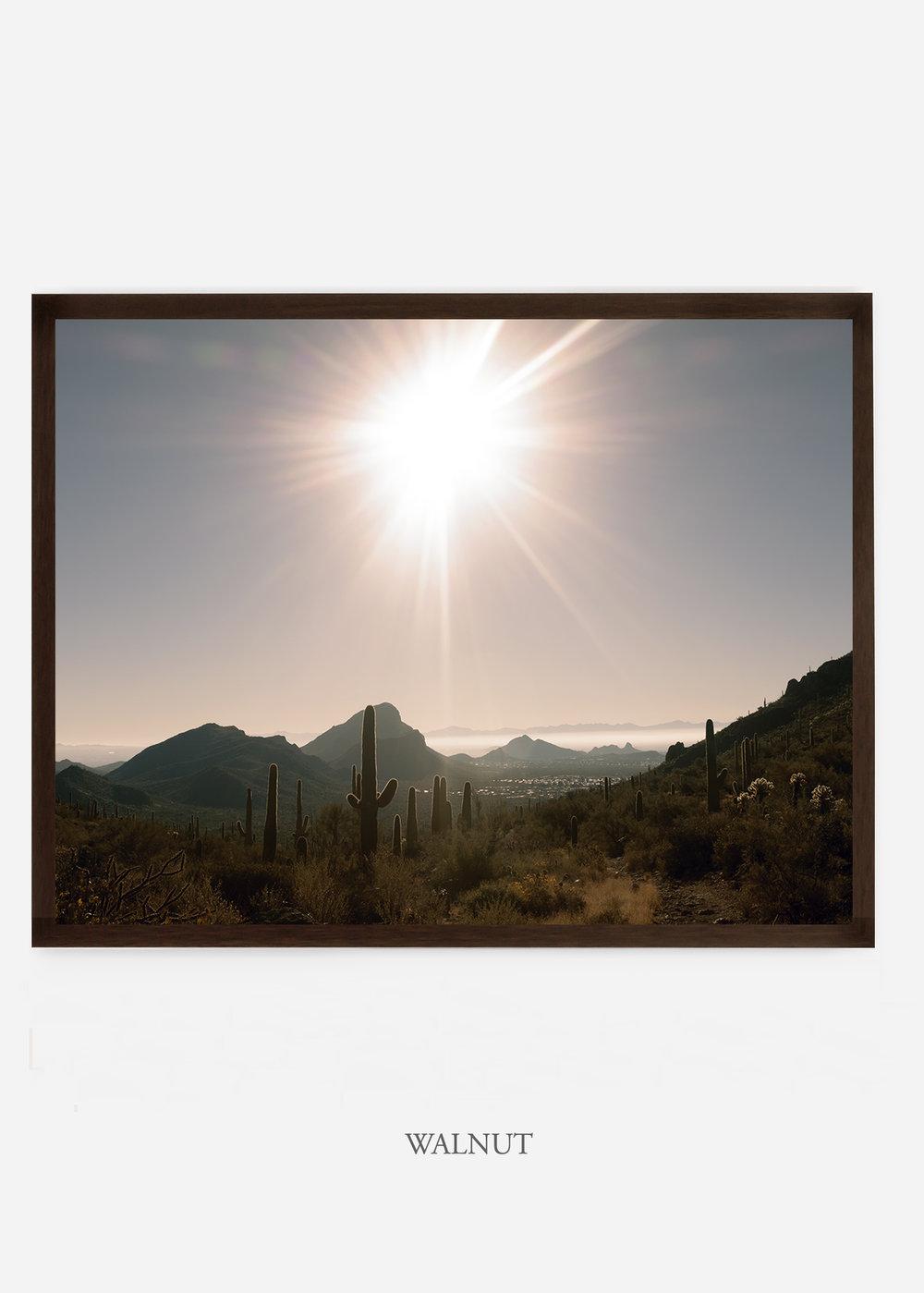 nomat_walnutframe-saguaroNo.15-wildercalifornia-art-wallart-cactusprint-homedecor-prints-arizona-botanical-artwork-interiordesign.jpg