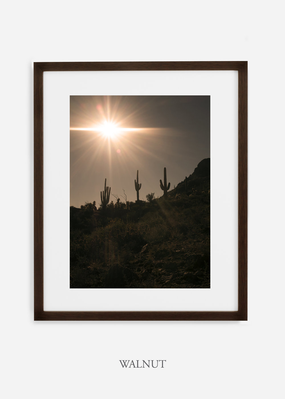 walnutframe-saguaroNo.16-wildercalifornia-art-wallart-cactusprint-homedecor-prints-arizona-botanical-artwork-interiordesign.jpg