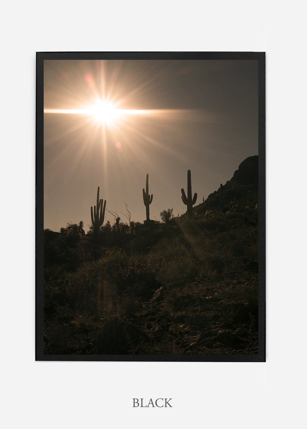 nomat-blackframe-saguaroNo.16-wildercalifornia-art-wallart-cactusprint-homedecor-prints-arizona-botanical-artwork-interiordesign.jpg