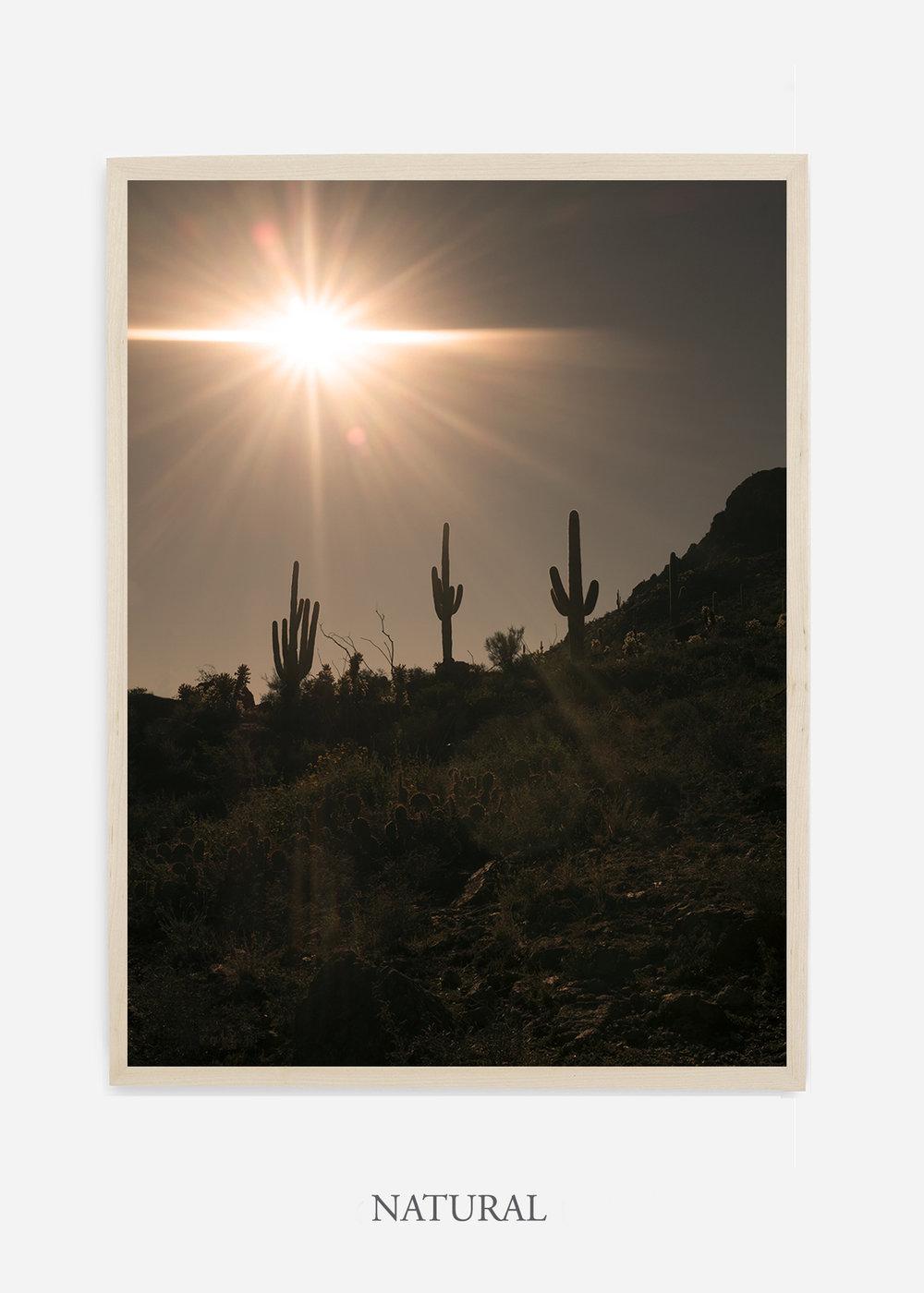 nomat-naturalframe-saguaroNo.16-wildercalifornia-art-wallart-cactusprint-homedecor-prints-arizona-botanical-artwork-interiordesign.jpg