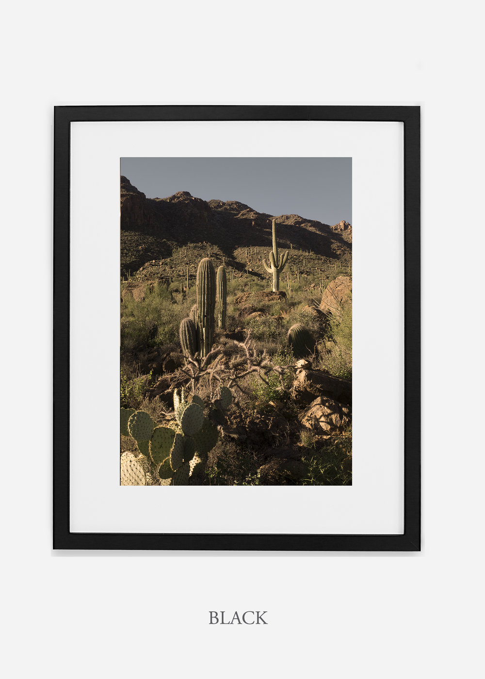 blackframe-saguaroNo.18-wildercalifornia-art-wallart-cactusprint-homedecor-prints-arizona-botanical-artwork-interiordesign.jpg