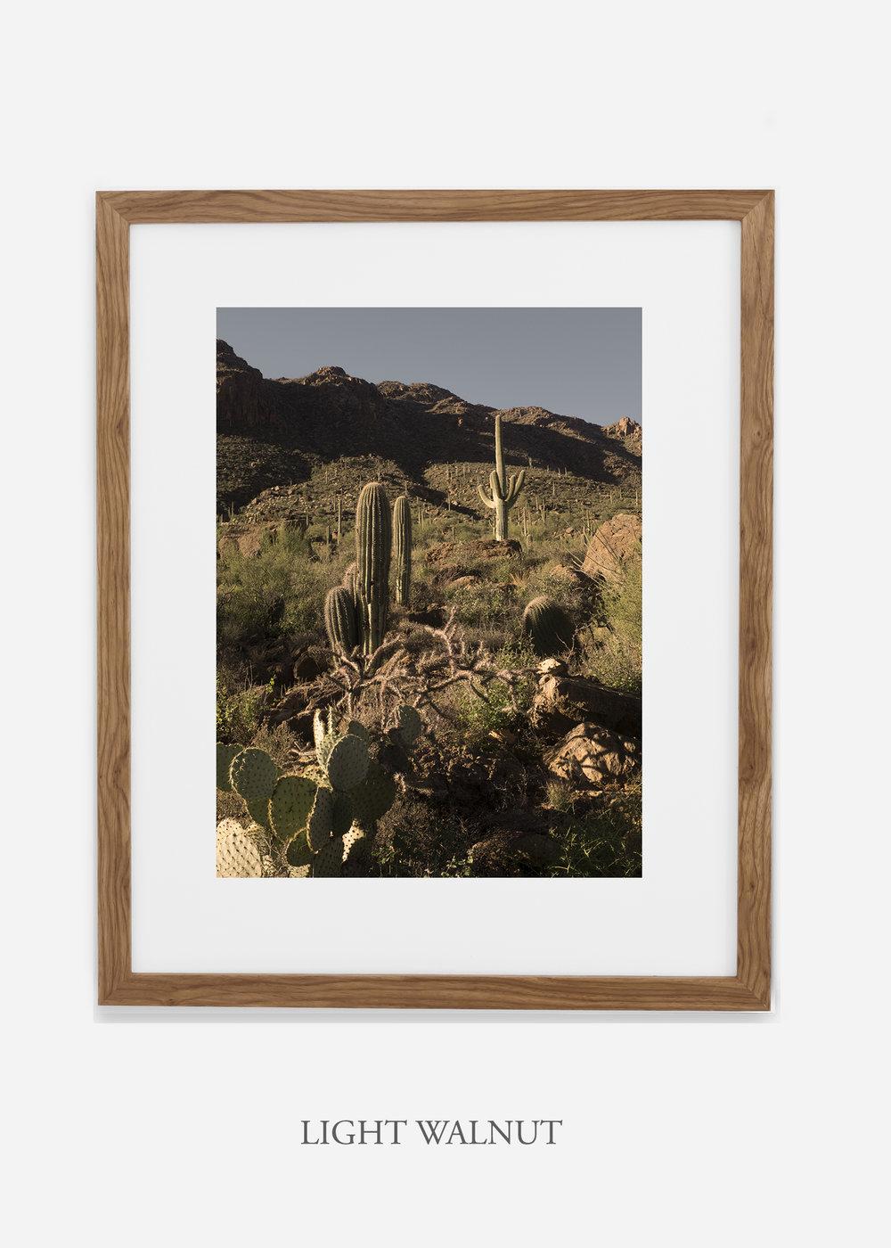 lightwalnutframe-saguaroNo.18-wildercalifornia-art-wallart-cactusprint-homedecor-prints-arizona-botanical-artwork-interiordesign.jpg