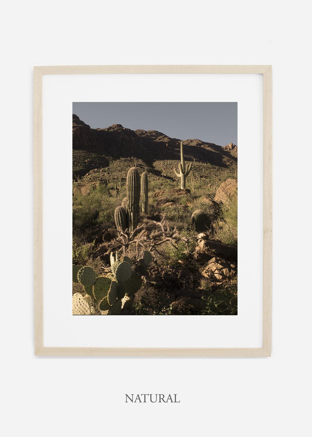 naturalframe-saguaroNo.18-wildercalifornia-art-wallart-cactusprint-homedecor-prints-arizona-botanical-artwork-interiordesign.jpg