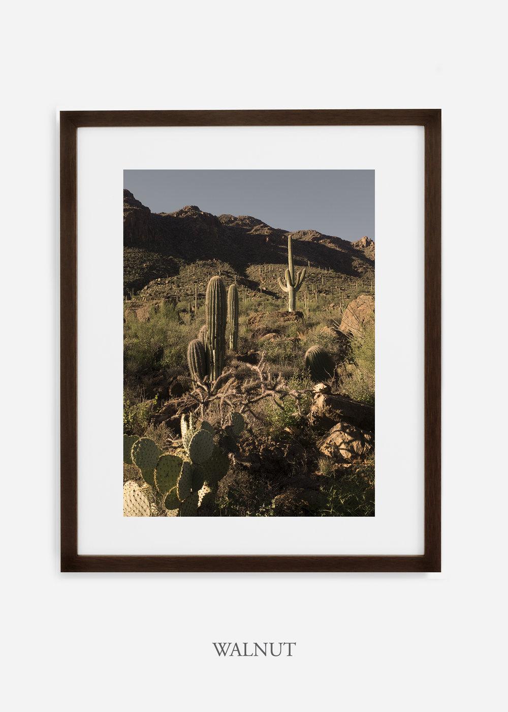walnutframe-saguaroNo.18-wildercalifornia-art-wallart-cactusprint-homedecor-prints-arizona-botanical-artwork-interiordesign.jpg