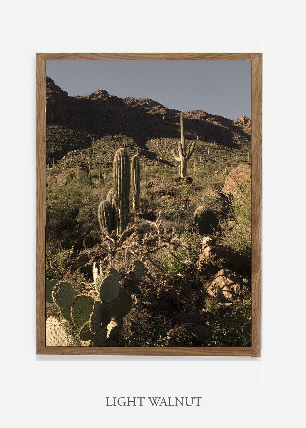 nomat-lightwalnutframe-saguaroNo.18-wildercalifornia-art-wallart-cactusprint-homedecor-prints-arizona-botanical-artwork-interiordesign.jpg