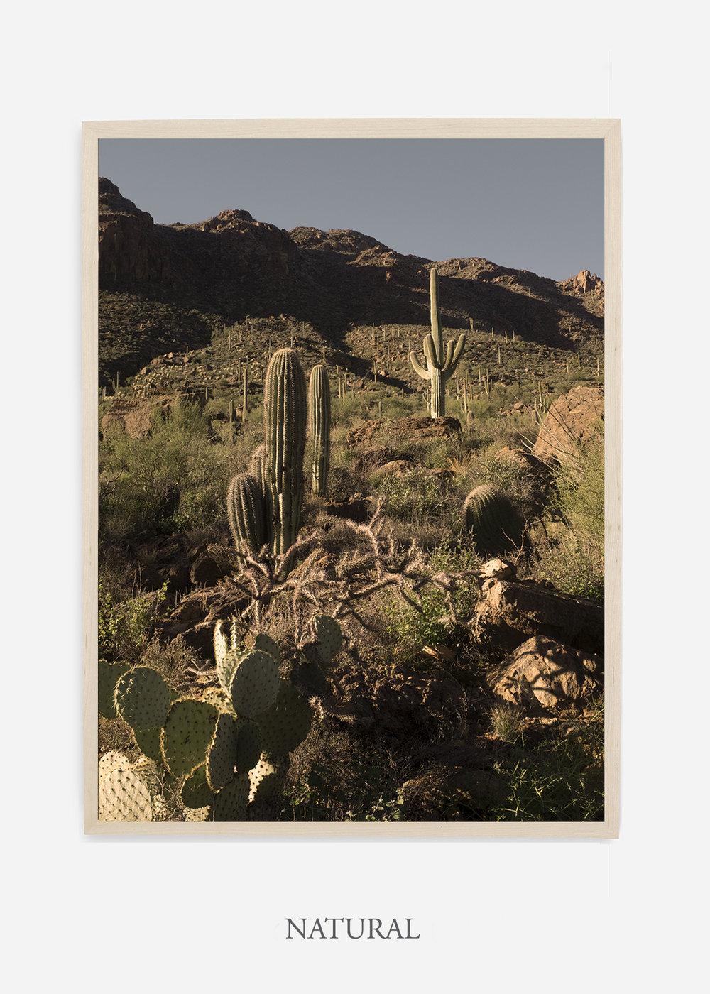 nomat-naturalframe-saguaroNo.18-wildercalifornia-art-wallart-cactusprint-homedecor-prints-arizona-botanical-artwork-interiordesign.jpg