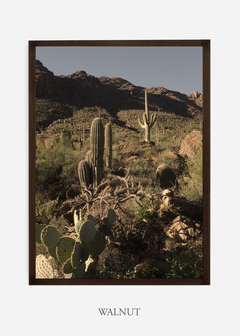 nomat-walnutframe-saguaroNo.18-wildercalifornia-art-wallart-cactusprint-homedecor-prints-arizona-botanical-artwork-interiordesign.jpg