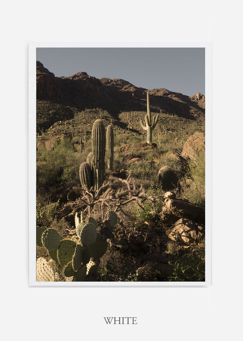 nomat-whiteframe-saguaroNo.18-wildercalifornia-art-wallart-cactusprint-homedecor-prints-arizona-botanical-artwork-interiordesign.jpg