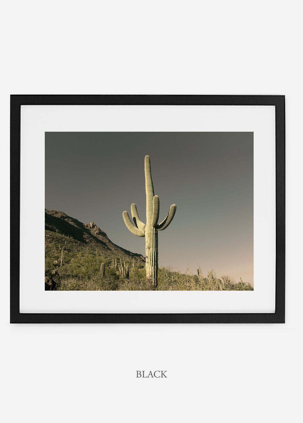 blackframe-saguaroNo.19-wildercalifornia-art-wallart-cactusprint-homedecor-prints-arizona-botanical-artwork-interiordesign.jpg