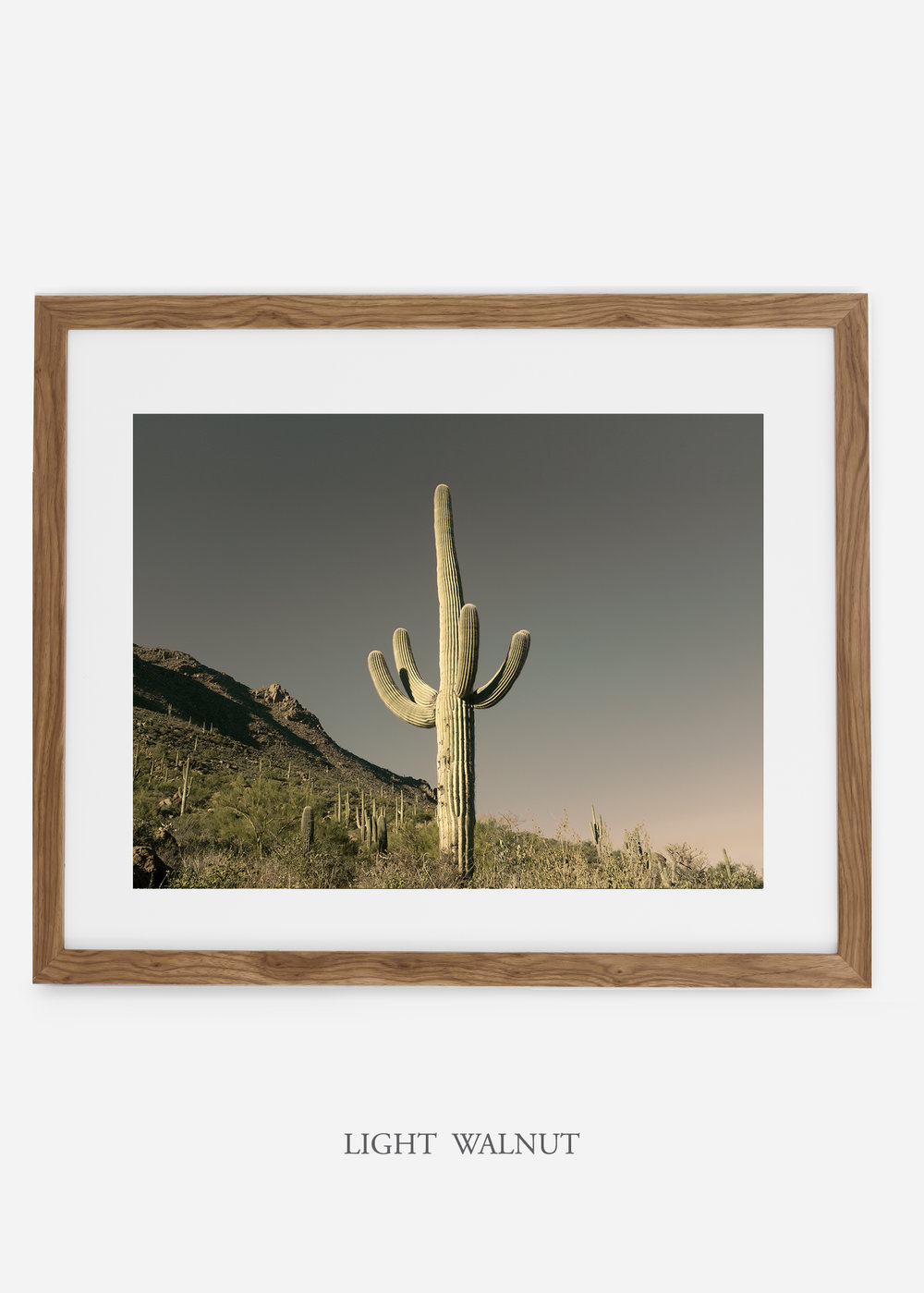 lightwalnutframe-saguaroNo.19-wildercalifornia-art-wallart-cactusprint-homedecor-prints-arizona-botanical-artwork-interiordesign.jpg