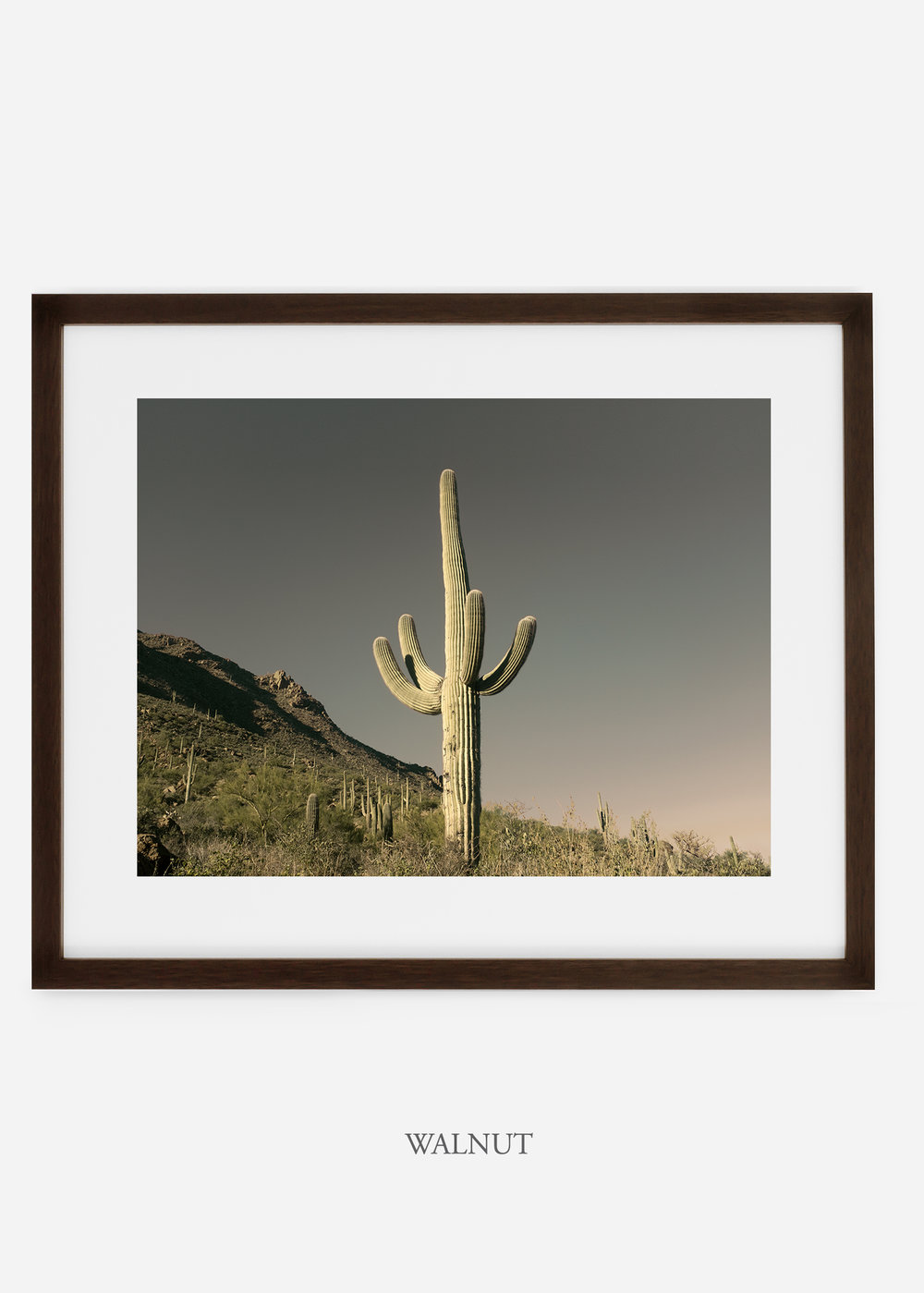 walnutframe-saguaroNo.19-wildercalifornia-art-wallart-cactusprint-homedecor-prints-arizona-botanical-artwork-interiordesign.jpg
