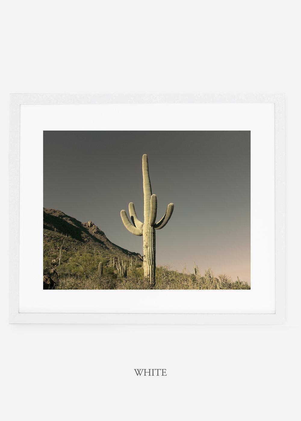 whiteframe-saguaroNo.19-wildercalifornia-art-wallart-cactusprint-homedecor-prints-arizona-botanical-artwork-interiordesign.jpg