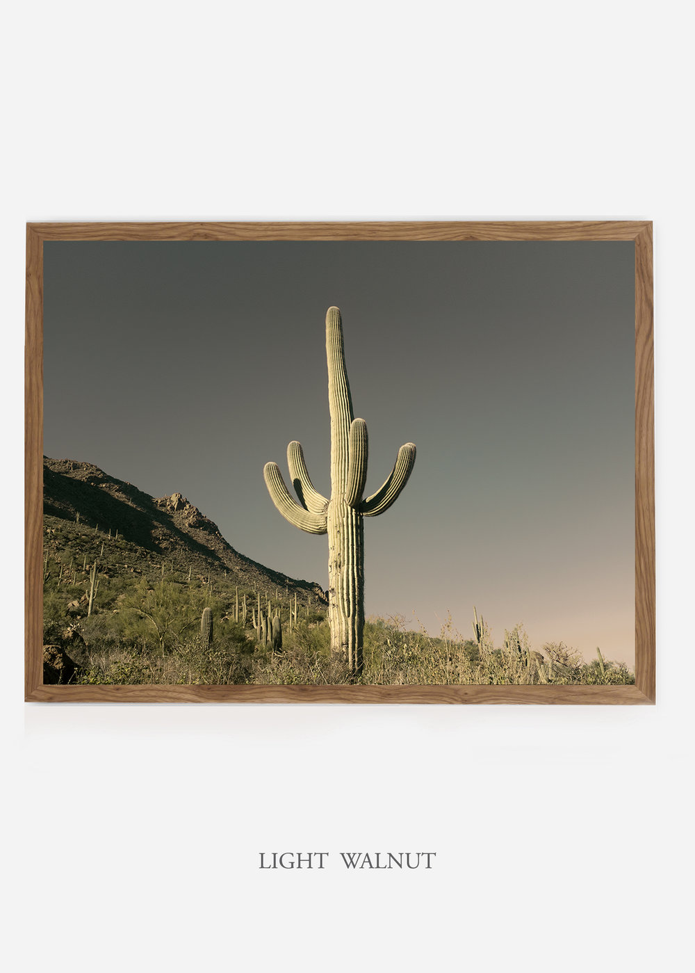 nomat_lightwalnutframe-saguaroNo.19-wildercalifornia-art-wallart-cactusprint-homedecor-prints-arizona-botanical-artwork-interiordesign.jpg