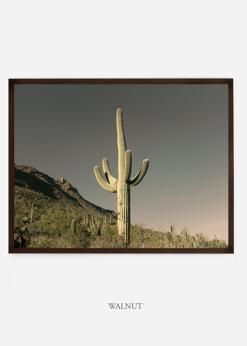 nomat_walnutframe-saguaroNo.19-wildercalifornia-art-wallart-cactusprint-homedecor-prints-arizona-botanical-artwork-interiordesign.jpg
