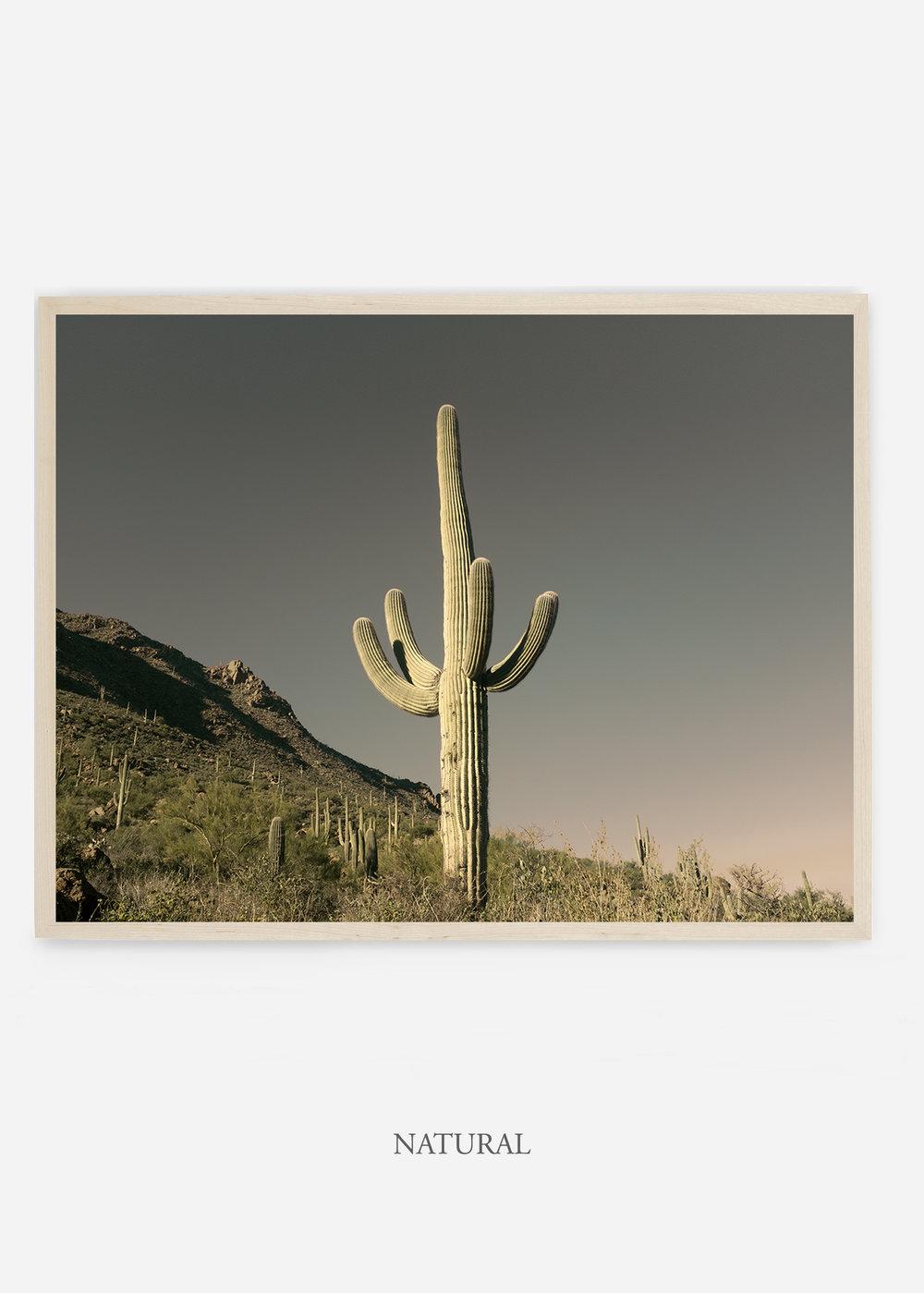 nomat_naturalframe-saguaroNo.19-wildercalifornia-art-wallart-cactusprint-homedecor-prints-arizona-botanical-artwork-interiordesign.jpg