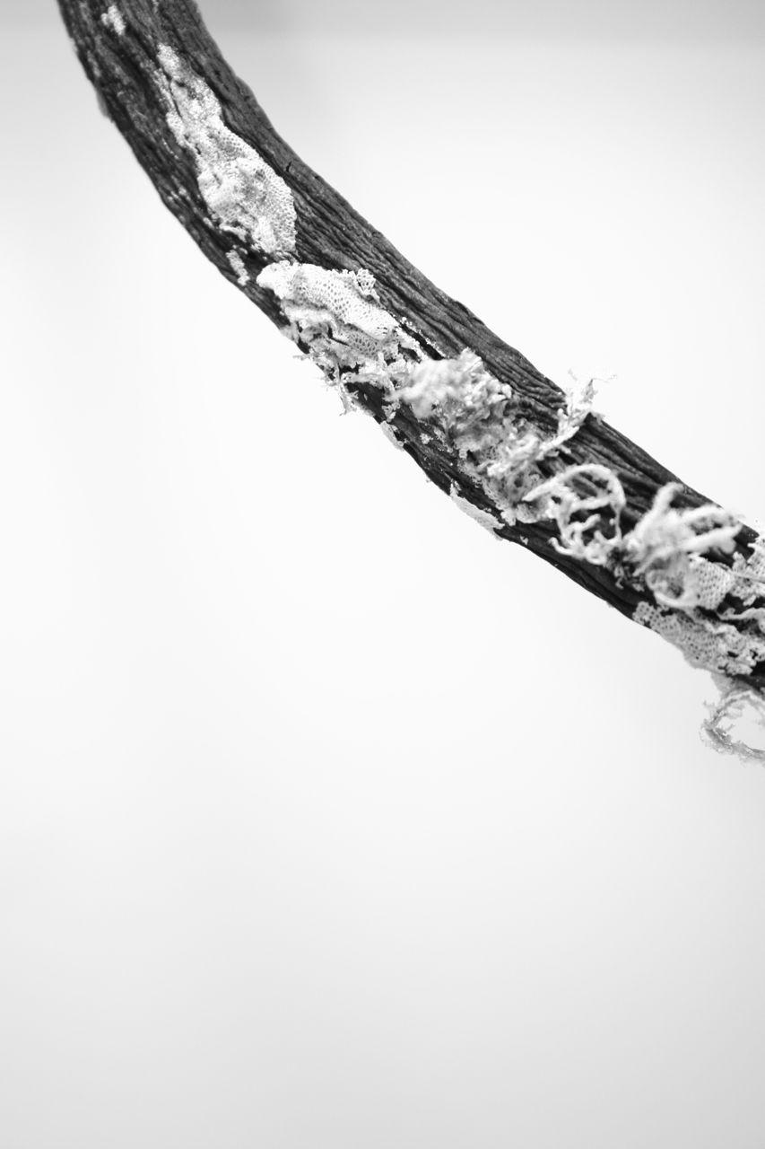lichenbranch.jpg