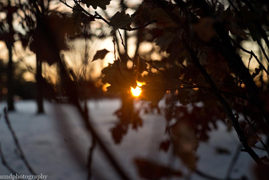 amdphotography, andreadicksphotography, amdphotography.org, ottawa photographer, winter photography, arboretum, arboretum photography