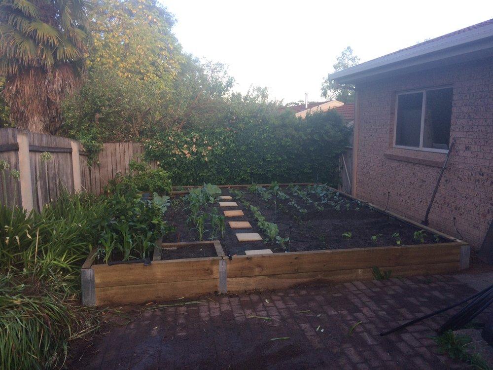 Sarah's new mega-vegie garden!