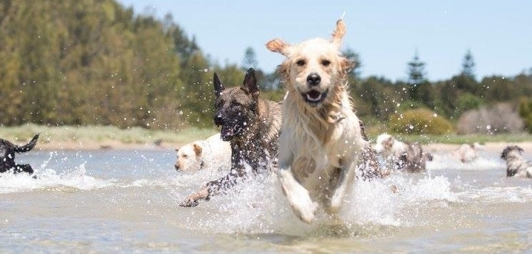 Photo: http://www.canberradogwalks.com.au/canberra-dog-swimming-areas/