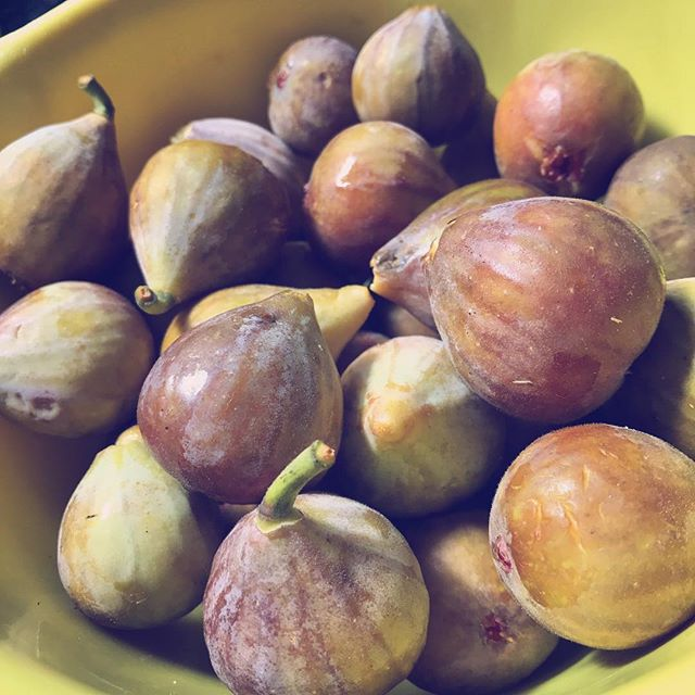 The first figs of the season! Our old fig tree is one of my favorite parts of our property. Itching to try new recipes with this year's harvest (though this batch will probably be gobbled up before I can blink 😉). What are your favorite fig recipes?