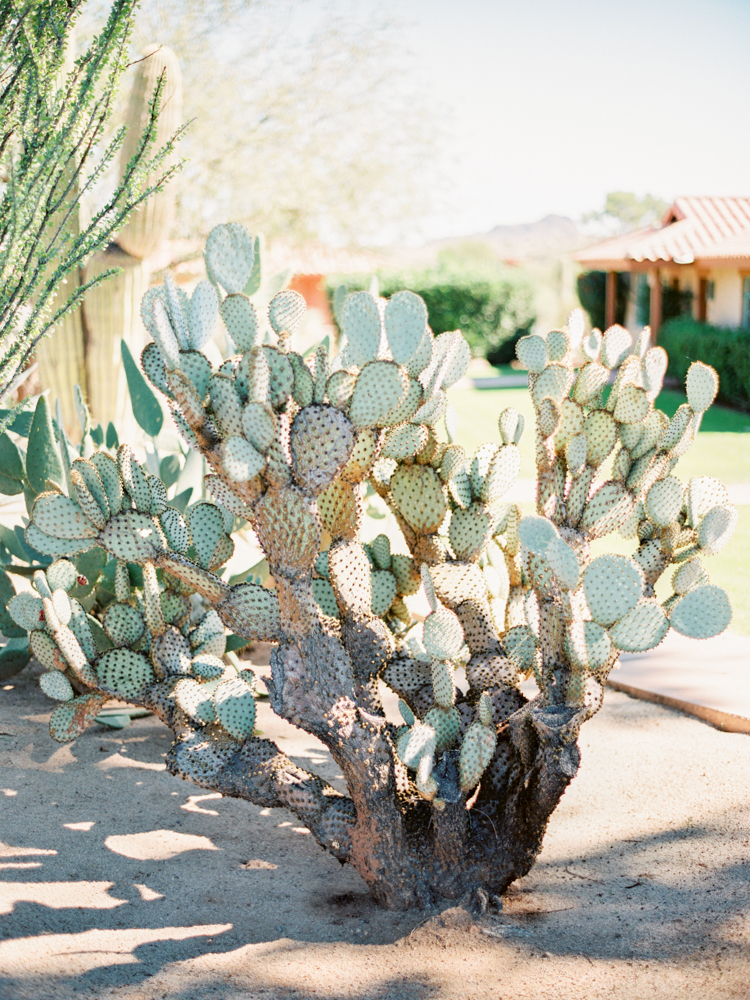 rancho de los caballeros wedding-21.jpg