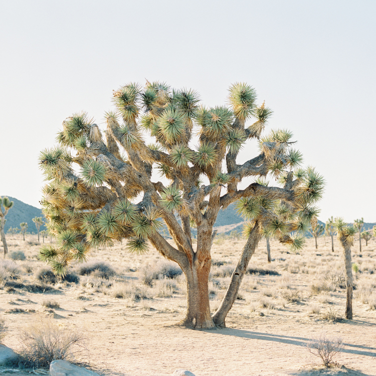 BLOG Joshua Tree-9.jpg
