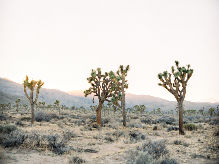 BLOG Joshua Tree-14.jpg