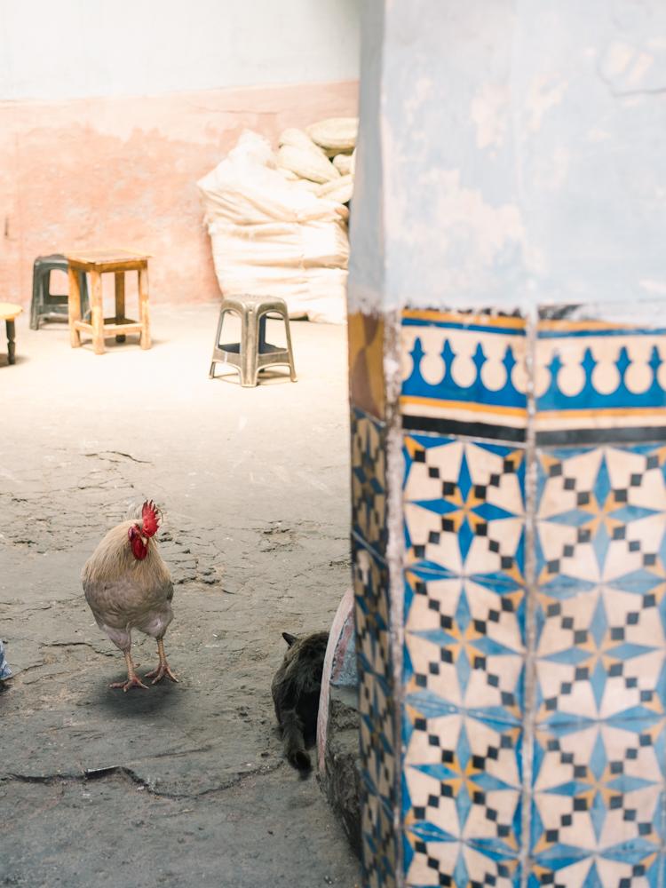 marrakech morocco-21.jpg