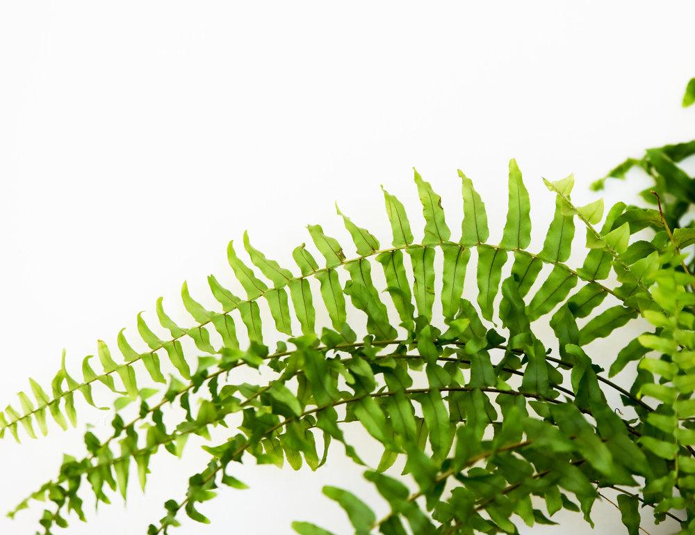 Greenery  (16).jpg