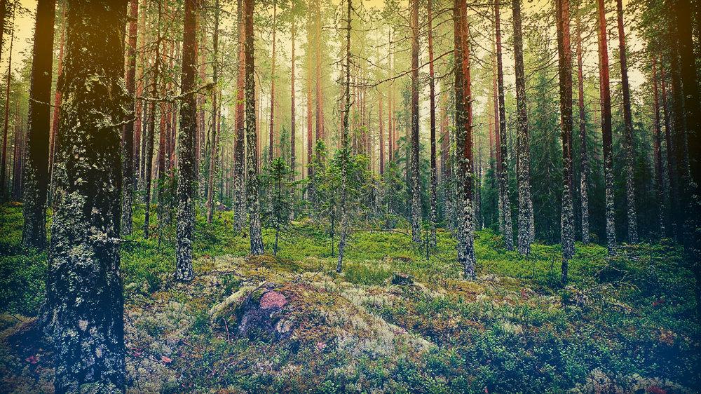 moody_forest_orig.jpg