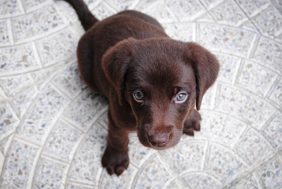 Foto_Puppy.jpg