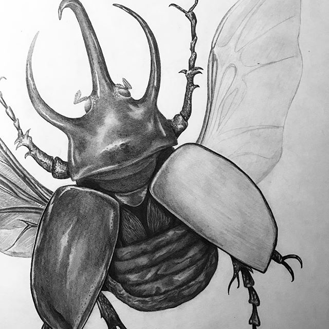 Buzz buzz #wingtwo ✏️ would anyone be interested in prints of this little guy? I have a bit of an idea for jazzing them up 😈