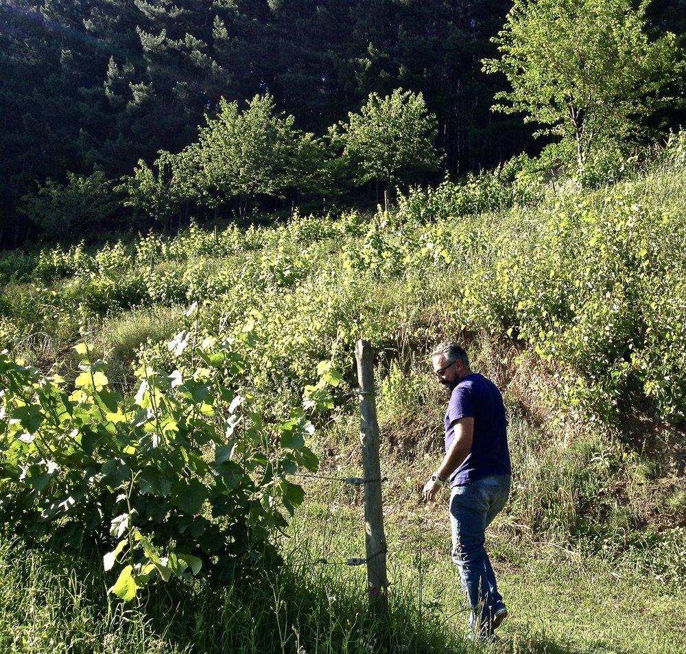 Tebongo vineyard