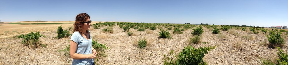 Esmeralda + 200+ year old Verdejo vines | Las Miñañas