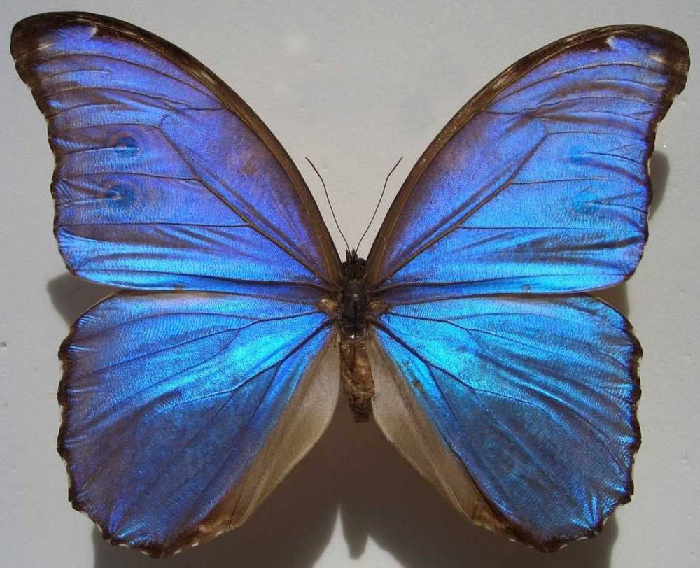 Blue Nestira by Aliete Guerrero