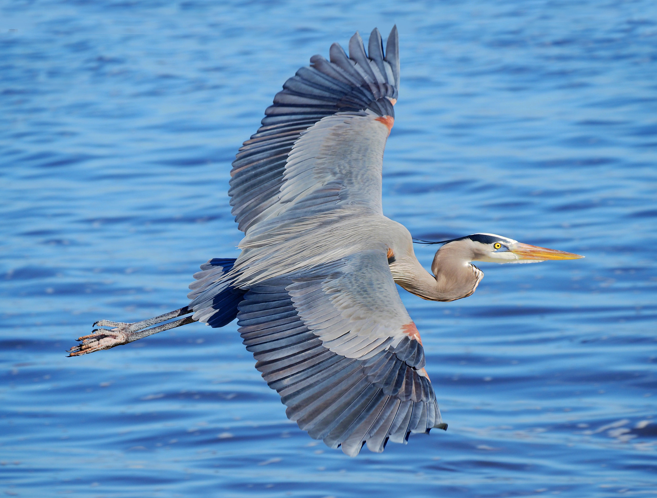 our team blue heron asset management