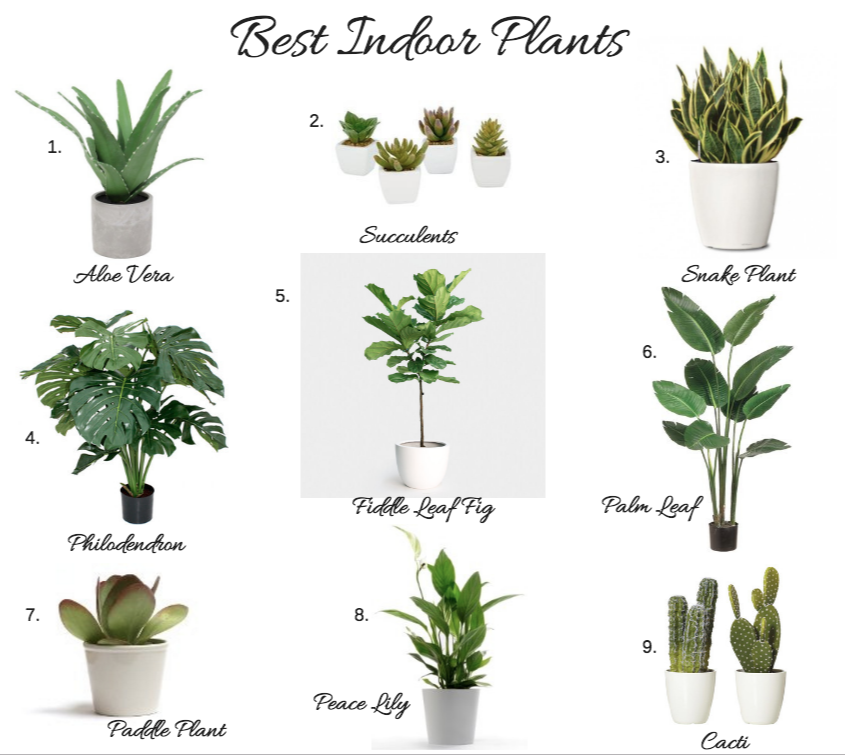 Gentil Top Indoor House Plants.png