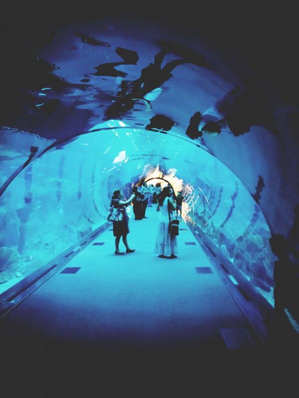 Dubai-Aquarium2-copy-e1364560949679.jpg