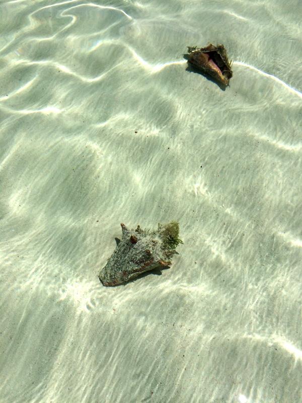 Bahamas_18.jpg