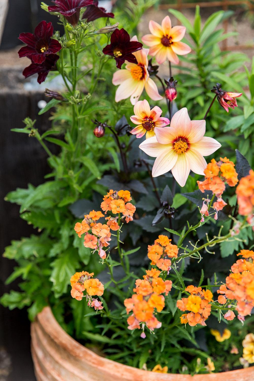 erinscottphotography_flowerland-25.jpg