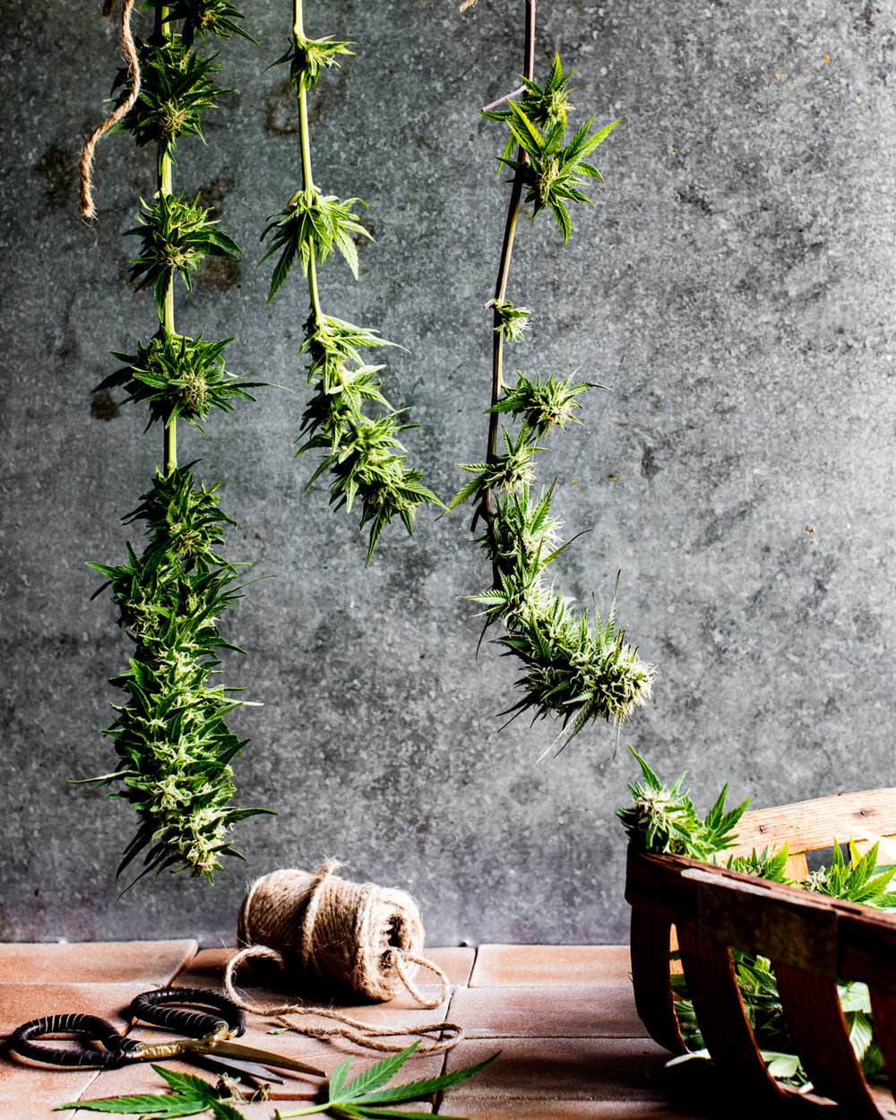 erinscottphotography_122west_cannabisgardener-6055.jpg