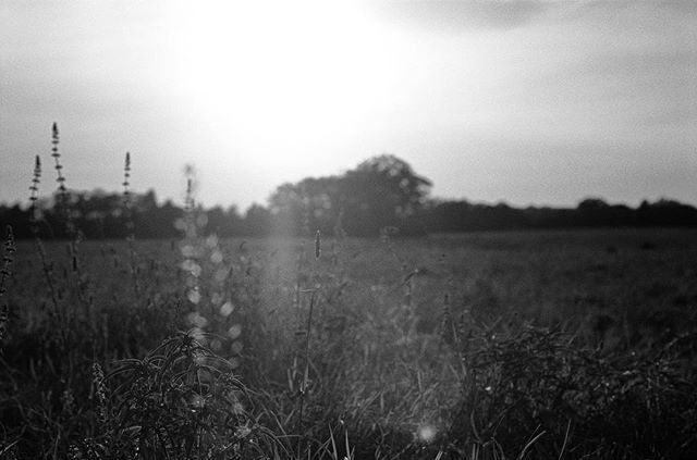 Texas Sunset, April 2017 #35mm #blackandwhite #film #photography #texas #sunset . . . . . . #filmisnotdead #staybrokeshootfilm #blackandwhitephotography #filmphotography #lomography #analog #tbt #ilford #ilfordfilm #ilfordphoto #photographer
