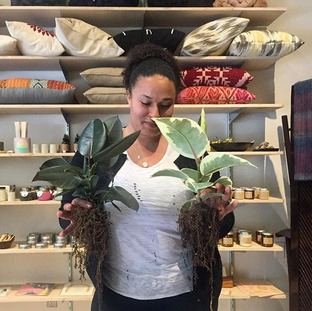 Helping things grow at the shop today. Come in and let us help you pot a plant! . . . #botanicalwomen #girlswithplants #interiordesign #apartmenttherapy #designmilk #gardening #indoorjungle #luxliving #matterandbone #dtla