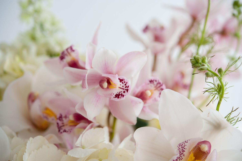 Cerise floral studio banner001g izmirmasajfo