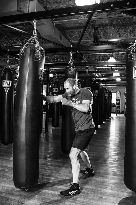 boxer-1923682_960_720.jpg