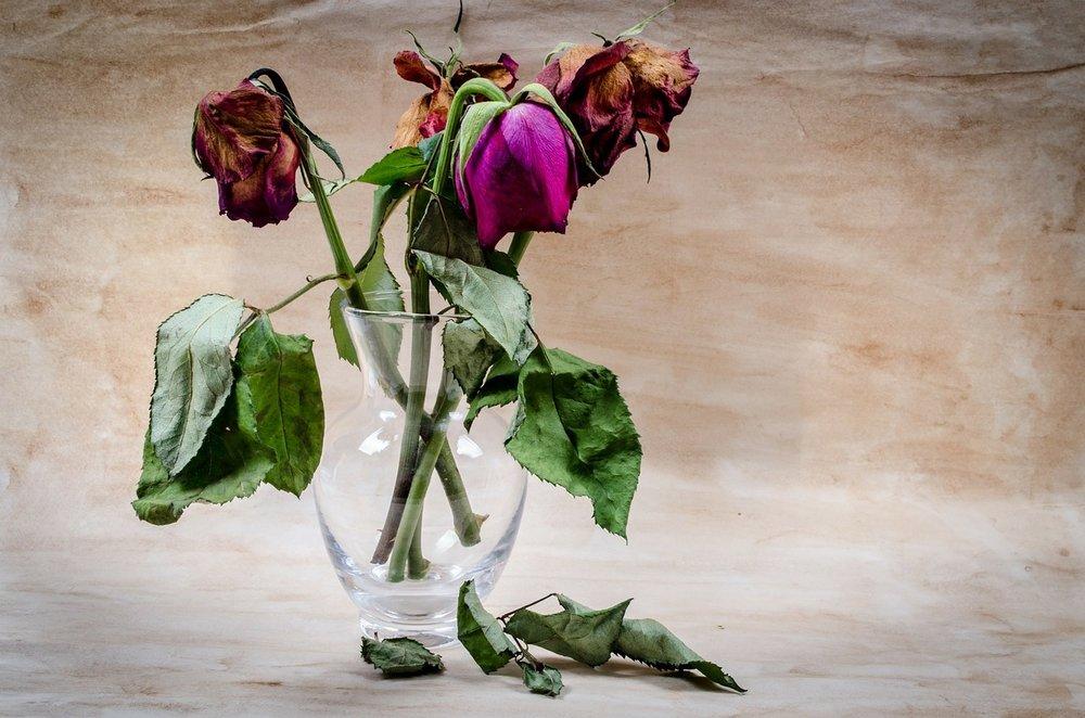 flower-316437_1280.jpg