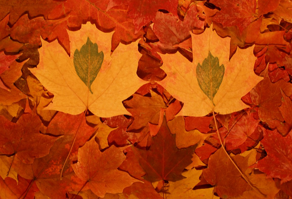 Baker_Seasonal-Fall-Pile-of-Maples-e1323114808464.jpg